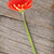 turuncu · çiçek · siyah · bahçe · arka · plan - stok fotoğraf © karandaev