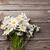 flor · de · primavera · ramo · superior · vista · blanco · jardinería - foto stock © karandaev