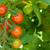 kiraz · domates · bahçe · domates · gıda · meyve · arka · plan - stok fotoğraf © karandaev