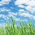 緑 · 麦畑 · 青 · 曇った · 空 · 夏 - ストックフォト © karandaev