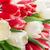 kolorowy · tulipany · bukiet · czerwony · biały - zdjęcia stock © karandaev