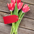 red tulips bouquet stock photo © karandaev