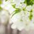 részlet · alma · rügy · fa · háttér · szépség - stock fotó © karandaev