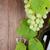 köteg · szőlő · vörösbor · üveg · dugóhúzó · fa · asztal - stock fotó © karandaev