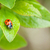 てんとう虫 · マクロ · 緑 · 自然 · 庭園 · 春 - ストックフォト © karandaev