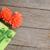 orange gerbera flowers and gift box stock photo © karandaev
