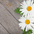 Daisy · rumianek · kwiaty · drewniany · stół · kopia · przestrzeń · liści - zdjęcia stock © karandaev