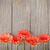 turuncu · papatyalar · soyut · papatya · makro - stok fotoğraf © karandaev