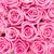 valentines day background with pink roses stock photo © karandaev