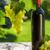vino · rosso · bottiglia · uve · ramo · etichetta · isolato - foto d'archivio © karandaev