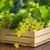 blanco · uvas · hojas · aislado · vino · naturaleza - foto stock © karandaev