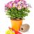 colorido · flores · jardín · herramientas · mesa · de · madera · aislado - foto stock © karandaev