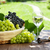 köteg · szőlő · fehérbor · dugóhúzó · fa · asztal · felső - stock fotó © karandaev