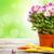 colorido · jardim · ferramentas · prímula · branco · flor - foto stock © karandaev