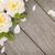 citromsárga · rózsa · virág · szirmok · fehér - stock fotó © karandaev
