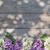 紫色 · ライラック · 茂み · 日 · 市 - ストックフォト © karandaev