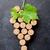 доске · дегустация · вин · вино · листьев · плодов · осень - Сток-фото © karandaev