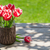 春 · 緑色の葉 · ぼけ味 · 日光 · 木材 · 空 - ストックフォト © karandaev
