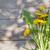 pissenlit · fleurs · bois · espace · de · copie · printemps · bois - photo stock © karandaev