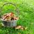 outono · cogumelos · cesta · grama · prado · ver - foto stock © karandaev