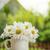 Daisy · rumianek · kwiaty · ogród · tabeli - zdjęcia stock © karandaev