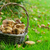 mand · champignons · vol · wild · bos - stockfoto © karandaev