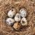 quails eggs in nest stock photo © karandaev