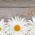 Daisy · rumianek · kwiaty · drewniany · stół · kopia · przestrzeń · tle - zdjęcia stock © karandaev