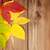 żółty · stare · drewno · mokro · ciemne · drewna - zdjęcia stock © karandaev