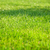 green grass sunny field stock photo © karandaev