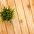 трава · цветочный · горшок · свежие · ботаника · Ромашки · растущий - Сток-фото © karandaev
