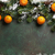 christmas background with snow fir tree and tangerines stock photo © karandaev
