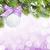 natal · colorido · decoração · neve · isolado · branco - foto stock © karandaev