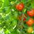 красный · зеленый · помидоров · разнообразие · старые - Сток-фото © karandaev