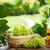 винограда · лист · корзины · виноград · деревянный · стол - Сток-фото © karandaev