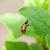 coccinelle · rouge · coccinelle · vert · printemps · herbe - photo stock © karandaev