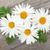 százszorszép · kamilla · virágok · fából · készült · fa · asztal · háttér - stock fotó © karandaev