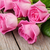 Pink roses bouquet stock photo © karandaev