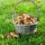 ヤマドリタケ属の食菌 · キノコ · バスケット · 緑 · 苔 - ストックフォト © karandaev
