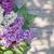 roxo · flores · jardim · tabela · topo - foto stock © karandaev