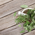fresh garden herbs in mortar on wooden table stock photo © karandaev