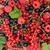 fresh ripe berries on wooden table stock photo © karandaev
