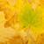 projektu · granicy · jesienią · kolor · wyschnięcia · pozostawia - zdjęcia stock © karandaev