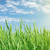 campo · verde · trigo · nublado · céu · luz - foto stock © karandaev