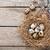 quails eggs in nest on rustic wooden background stock photo © karandaev