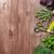新鮮な · 庭園 · パセリ · ハーブ · 木製のテーブル · 先頭 - ストックフォト © karandaev