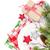 Noël · cadeau · branche · isolé · blanche - photo stock © karandaev