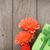 arancione · fiori · scatola · regalo · isolato · bianco · natura - foto d'archivio © karandaev