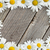 daisy chamomile flowers on wood stock photo © karandaev