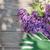 orgona · virágok · kert · köteg · zöld · levelek · tavasz - stock fotó © karandaev